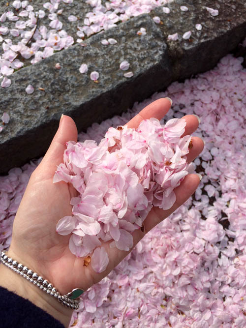 Cinco Lugares Donde Ver Los Cerezos En Flor O Hanami En Kyoto